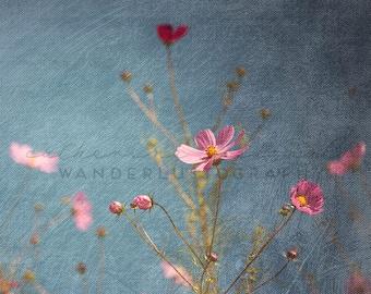 Seoul Cosmos 2 - Photographic print -  wanderlust, travel, bohemian, pink, blue, asia, boho,  korea 12 x 12, 16 x 16, 20 x 20