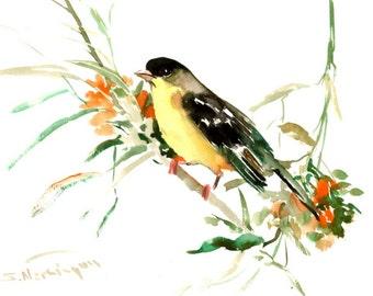 Lesser Goldfinch, Original watercolor painting, 12 X 9 in, birds, bird, finch