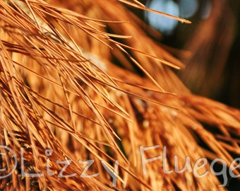 Golden Breeze photograph 6.75x10 Fine Art Photography Print of Nature along Tristan Bay