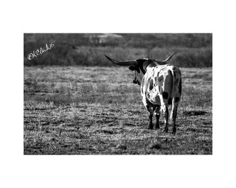 Longhorn Meditation Fine Art Photography Black and White Texas Large Wall Art Cow Horns Ranch House Chic County Western Fine Art Out West