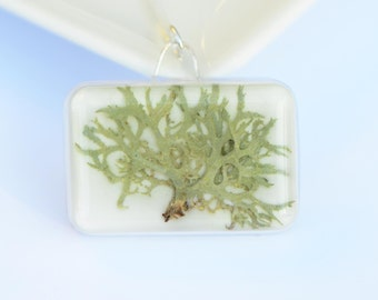 Pagano colgante collar botánico real presionado Liquen musgo joyería hielo prensado resina elegante moderna de la joyería druidas bosque árbol en miniatura
