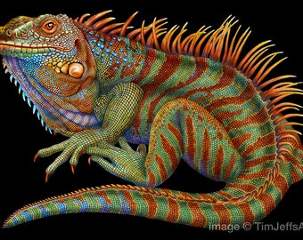 Iguana 2 Colored Pencil Drawing