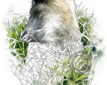 Marmot, Olympic watercolour - wildlife art - nature print of original artwork
