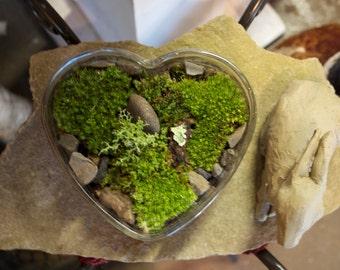 Garden of  love  Moss magical forest terrarium