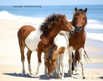 Wild Horse Love - Digital Photography, Horse Family, Horse Photography, Wild Horse Art, Horse Decor, Wild Horses, Assateague Horse, Ponies
