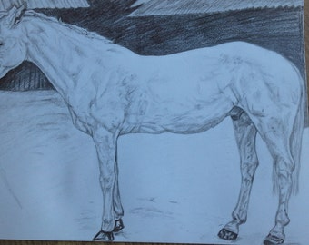 White horse drawing A4