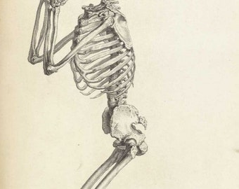Praying Skeleton by William Cheselden 1733 reproduction of anatomical print