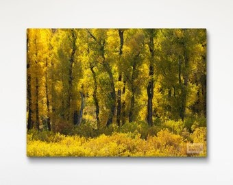 Autumn Trees Stretched Canvas, Fine Art Photography, Yellow Print, Nature Wall Art