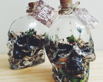 Skull Terrarium - Living & Breathing