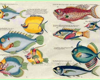 antique french illustration colourful tropical fishes print digital download