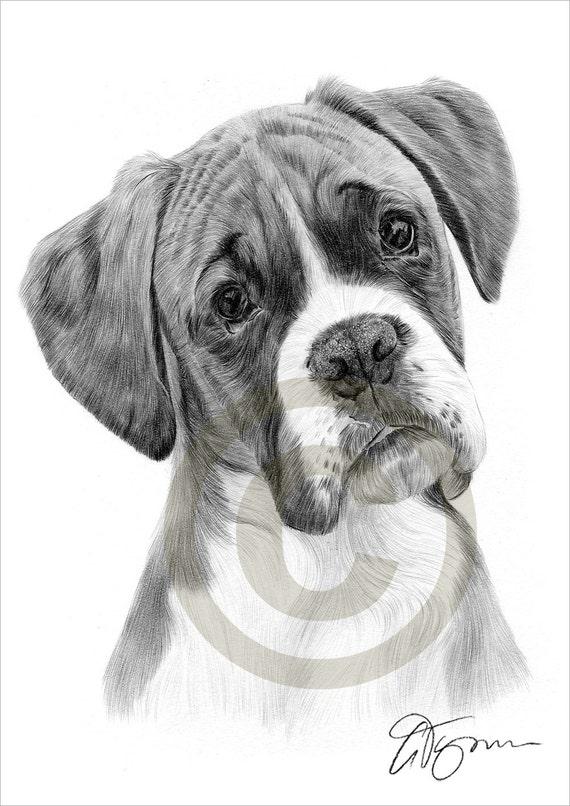 Chien boxer dessin au crayon impression oeuvre format a4 - Dessin chien boxer ...