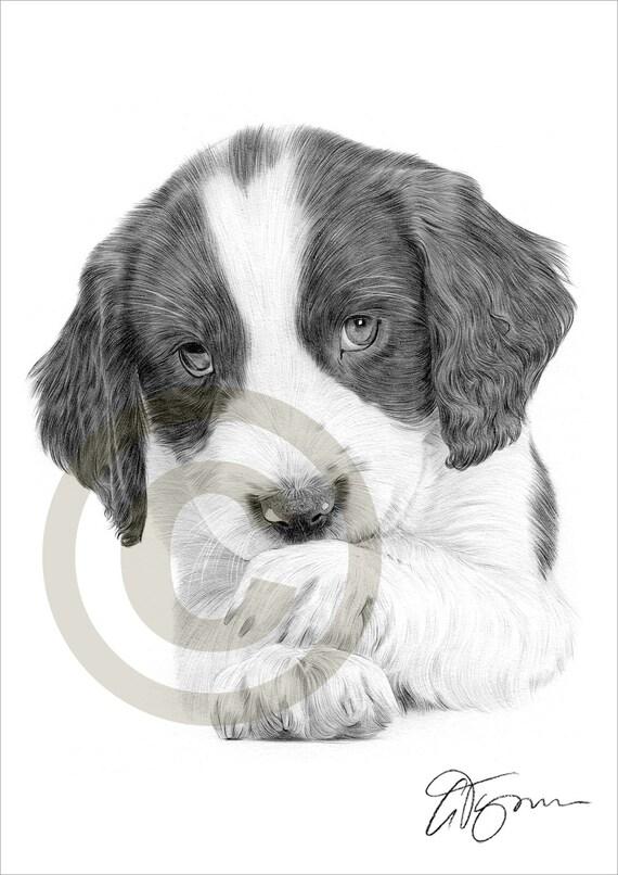 Matita di springer spaniel cucciolo cane disegno opera di for Disegni a matita di cani