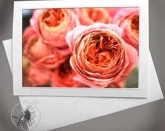 Photo Greeting Card: Peach Garden Rose