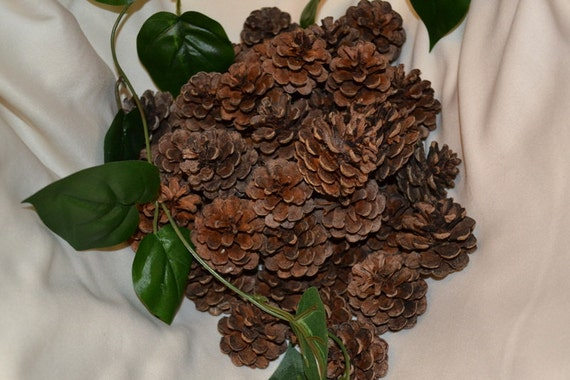 Items similar to pine cones supplies rustic wedding home