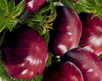 RARE Tomato Black Elephant - 10 seeds - UK SELLER