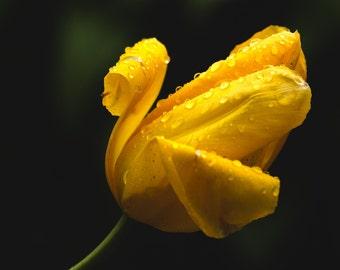 Lone Flower - Solitude