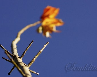 Digital Download photography Maple