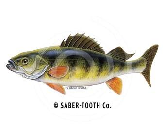 Perch Fish Decal Sticker