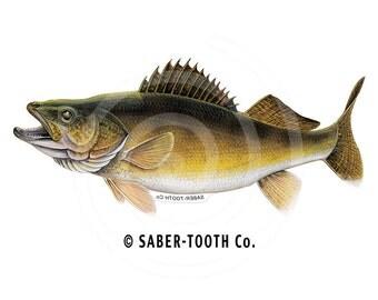 Walleye Fish Decal Sticker