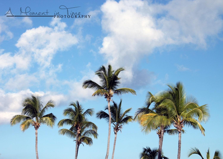 palm tree decor beach wall art beach photography beach. Black Bedroom Furniture Sets. Home Design Ideas