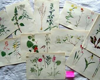 Vintage 1924 Botanical Flower Print Bookplates Lot of 10 Free US Shipping