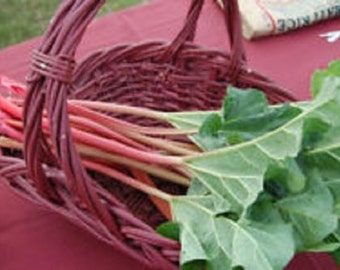 Organic Heirloom  Victoria Rhubarb 15 Vegetable Seeds NON-GMO Perennial Has a slight taste of red wine  Easy to grow from seed.