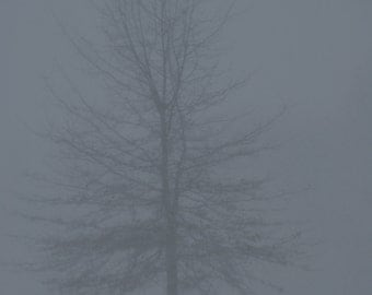 unframed photo of tree in field in snow storm