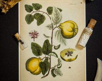 Botanical Illustration: Vintage 5X7 Print
