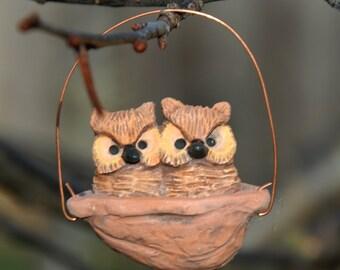Great horned owls walnut nest