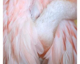 Nature Photograph -Flamingo #4 - Bird Art - Bird Print- Feather Art - Fine Art Photograph- Pink Print - Home Decor - Wall Art - Gift For Her