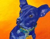Pet Portrait - Contrasting Colors