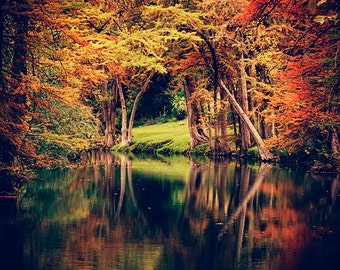 Texas Landscape Photography - Autumn Foliage - Cypress Trees - Nature - Hill Country - Guadalupe River