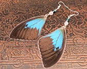 Black n Blue - Real Butterfly Wing Earrings