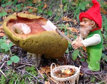 Photographic Art Print - Gnome Series #4