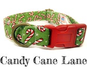 Candy Cane Dog Collar - Christmas - Organic Cotton - Antique Brass Hardware - Candy Cane Lane