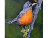 """Robin Bird Art  Print of Original Painting by Dottie Dracos, """"Robin in Oregon Forest"""""""