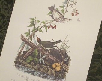 Vintage Bird Illustration - Audubon Book Plate - Wagtale/ Thrush