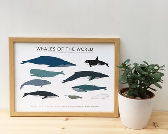 "Whales of the World print (A4, A3 or 13""x19"")"