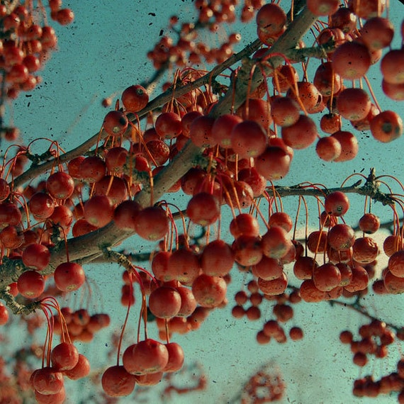 Nature Photography, Red Berries, Winter, Tree Branches, Surreal, Dreamy, Grunge, Teal, Home Decor,  Dark Red