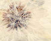 Dandelion Photography, neutral, macro, nature photography, dandlion picture, dreamy, nursery wall art