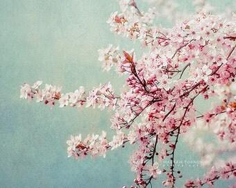 Cherry Blossom Print, Cherry Blossom Tree Picture, Cherry Blossom Flower Photography