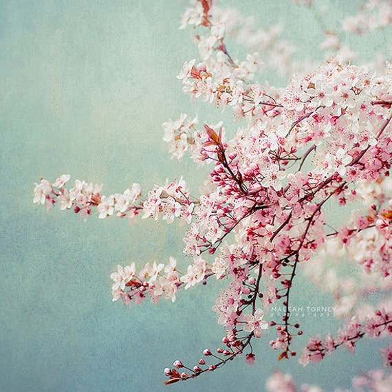 Pink Flower Photography pastel, cherry blossoms, blue and pink, nursery art, shabby chic, flower picture