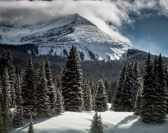 Colorado Photography, Mountain, Pine Forest Decor, Colorado Photography, Large Landscape Print, Nature Photography, Colorado Wall Art
