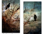 Pair of Black Ravens Crows Birds Teal Turquoise Nature Photography Archival Fine Art Metallic Paper Prints Home Decor FREE Ship Diptych