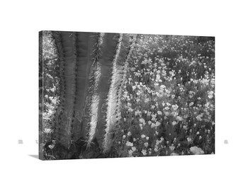 Cacti Print, Photo on Canvas, Black and White, Gallery Wrap, Saguaro, Wildflower Art, Arizona Art, Desert Art, Cactus Art, Picacho Peak