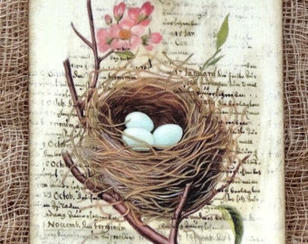Bird Egg A Nest Is A Home Tags #294
