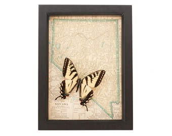 Framed Map of Nevada with Tiger Swallowtail butterfly