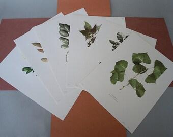 "Set of six letterpress printed botanical prints ""The Trees of Corriganville Regional Park"""