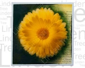 Yellow flower art greeting card, unique floral design.