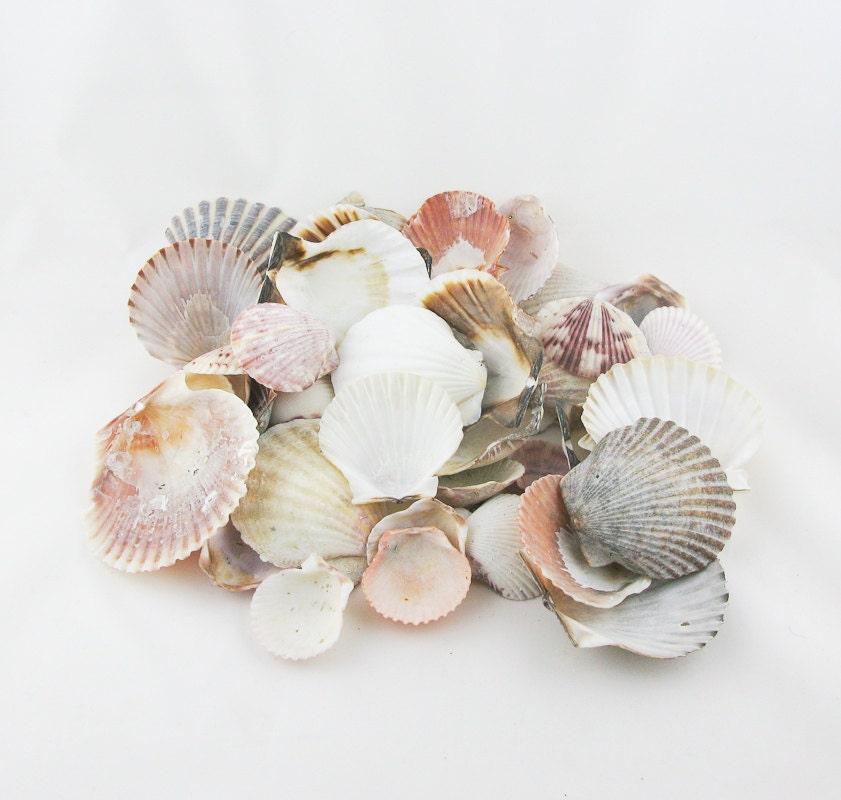 Scallop shell destash craft lot - Scallop shells for crafts ...